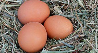 Uova contaminate in Italia: succede nelle Marche ed in Lazio