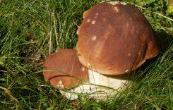 Funghi o piante: evitare la raccolta se non si ha esperienza
