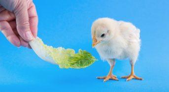 Come risparmiare sugli animali domestici: consigli e suggerimenti