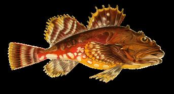 Guardia Costiera: controlli su prodotti ittici non idonei al consumo umano