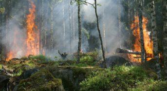 Grave incendio nell'Isola di Temptation Island.