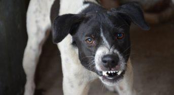 Indagato il proprietario dei cani che ieri hanno ucciso la 20enne a Satriano.